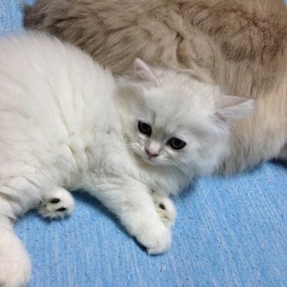 猫01-2015-8-24