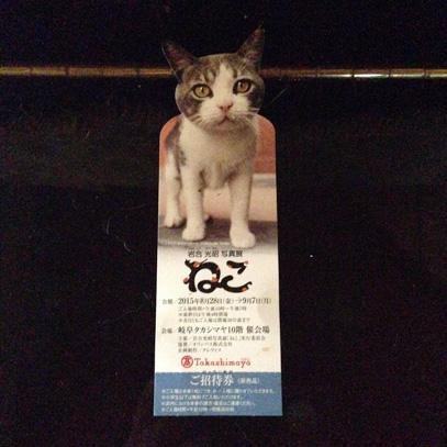 猫展01-2015-9-5