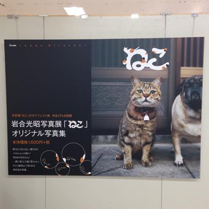 猫展02-2015-9-5