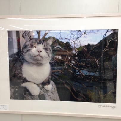 猫展05-2015-9-5