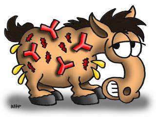20150825_Blog2_Bullous_Pemphigoid_Pict1.jpg