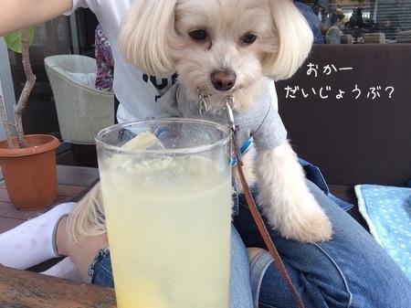 もう一杯!