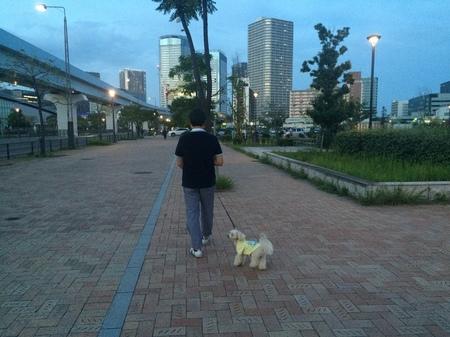 おとーとお散歩