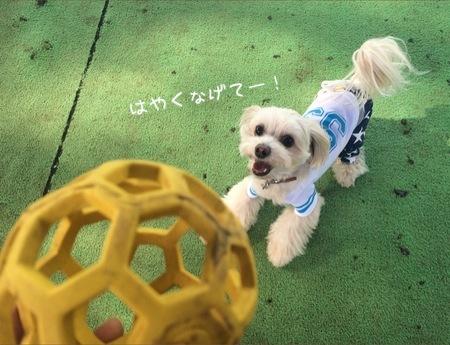 ボールボール!