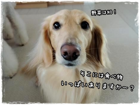 waku1.jpg
