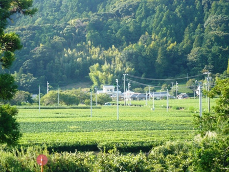 道の駅掛川:風景