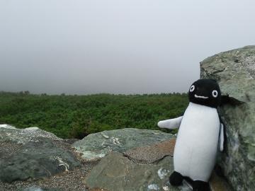 20150809-ICOCA ペンギンさんより (13)