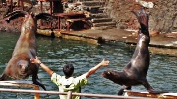20150908-おたる水族館 (9)-加工