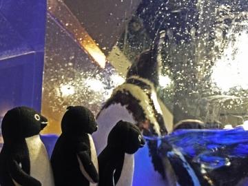 20150912-すみだ水族館 (23)-加工