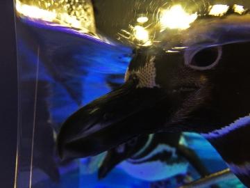 20150912-すみだ水族館 (27)-加工