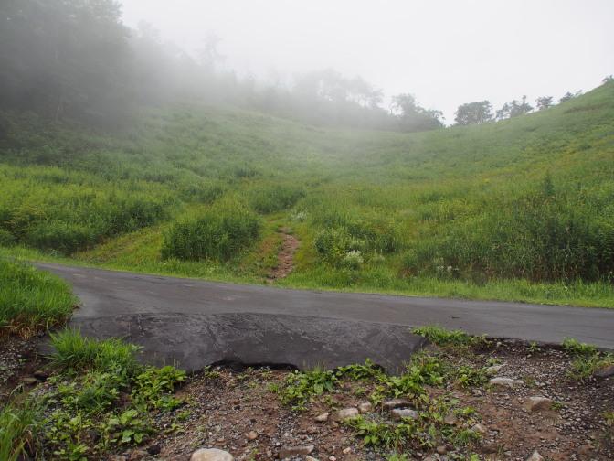 テレビ山道を横切る