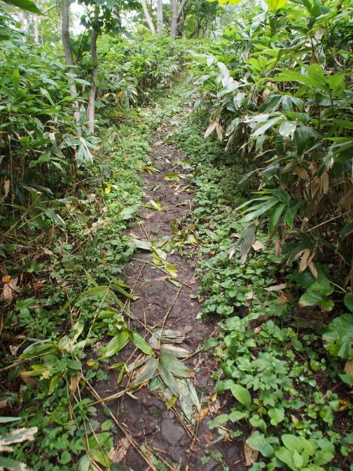 笹刈りされた登山道