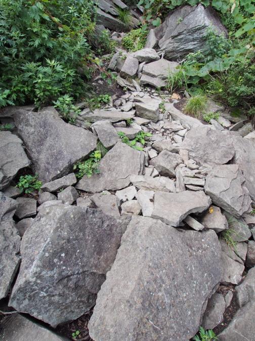 岩の下には…