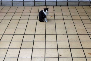 Cat on the tiles