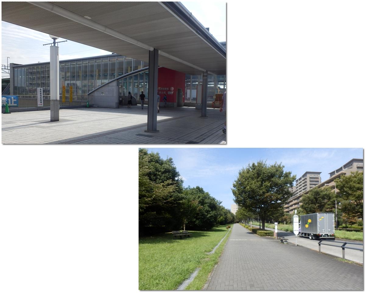 page横山の道1