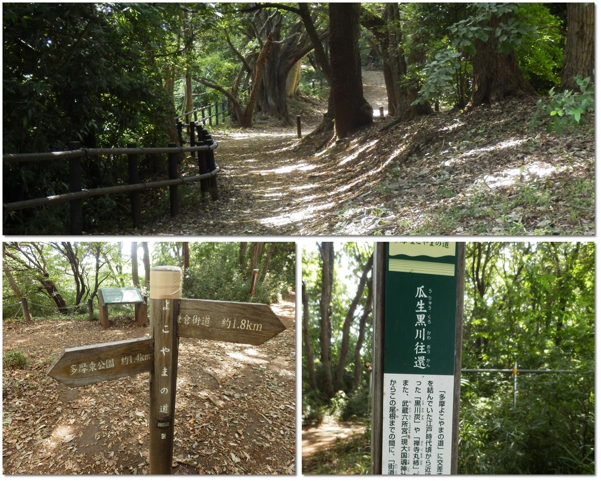 page横山の道4