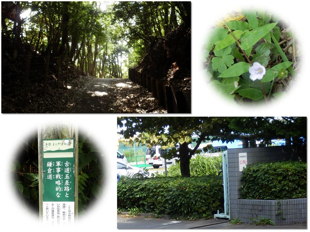 page横山の道8