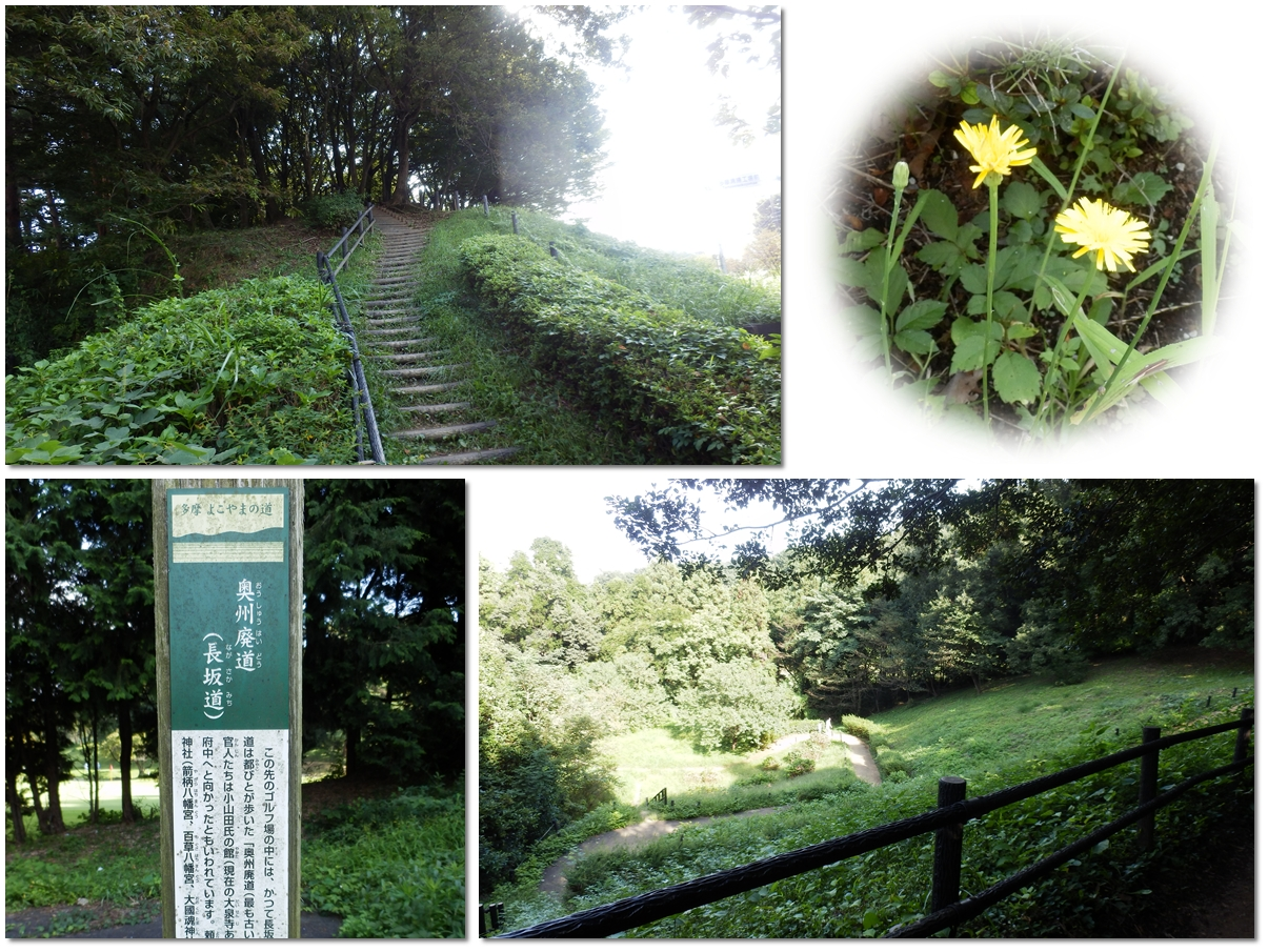 page横山の道95