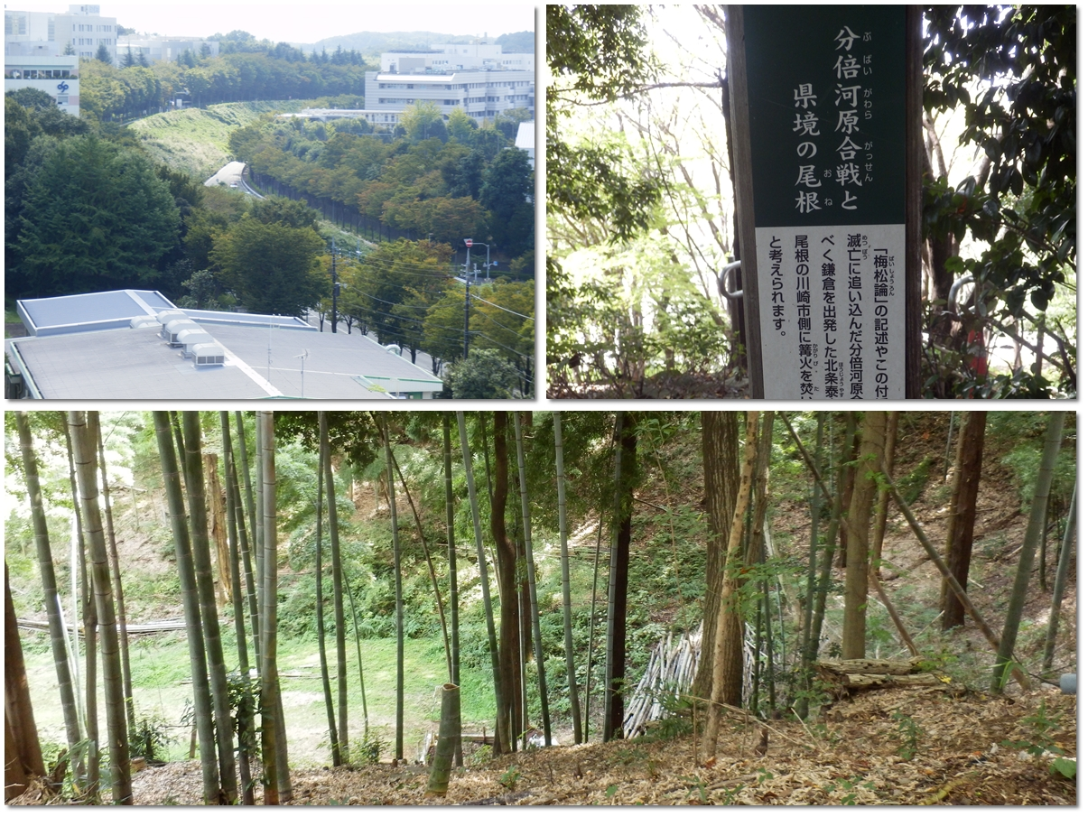 page横山の道99