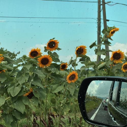 2015年・悲しい夏の思い出です