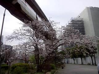20150328芝浦の桜(その4)
