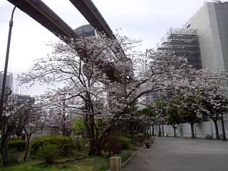 20150328芝浦の桜(その5)