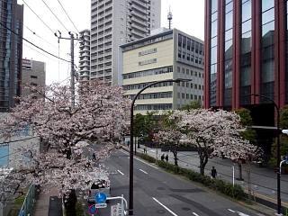 20150328芝浦の桜(その8)