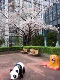 20150328芝浦の桜(その24)