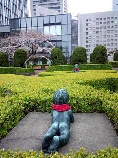 20150328芝浦の桜(その27)
