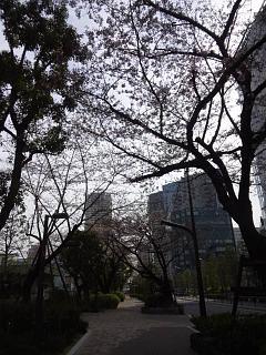 20150328芝浦の桜(その28)