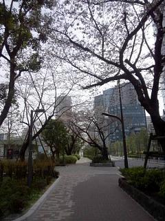 20150328芝浦の桜(その29)