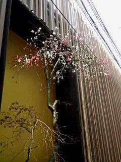 20150328芝浦の桜(その43)