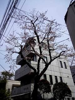 20150328芝浦の桜(その45)