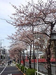 20150328芝浦の桜(その47)