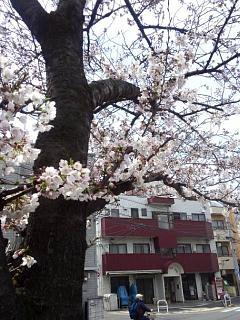 20150328芝浦の桜(その50)