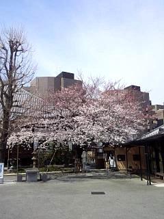 20150328芝浦の桜(その57)