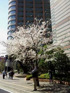 20150328芝浦の桜(その60)