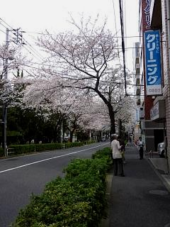 20150329目黒の桜(その2)