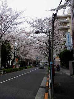 20150329目黒の桜(その3)