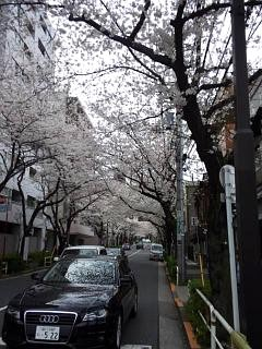 20150329目黒の桜(その4)