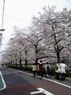 20150329目黒の桜(その7)
