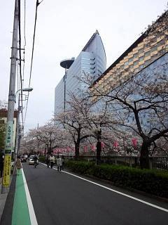 20150329目黒の桜(その9)