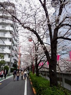 20150329目黒の桜(その10)