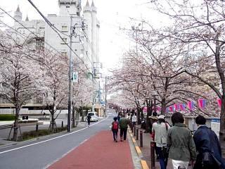 20150329目黒の桜(その12)