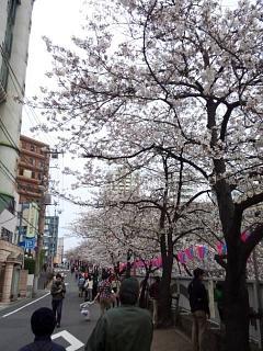 20150329目黒の桜(その13)