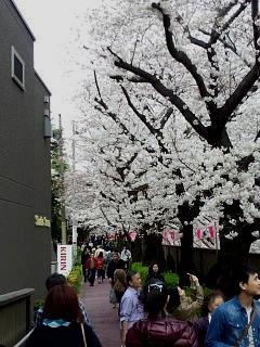 20150329目黒の桜(その40)