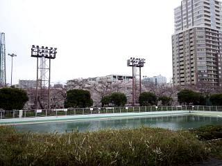 20150329目黒の桜(その43)
