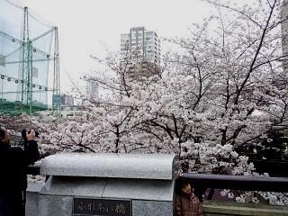 20150329目黒の桜(その44)