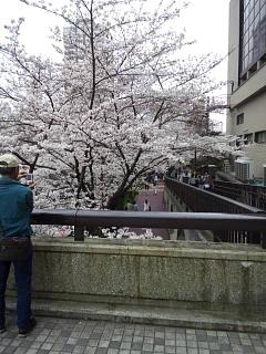 20150329目黒の桜(その50)
