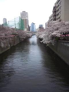 20150329目黒の桜(その53)